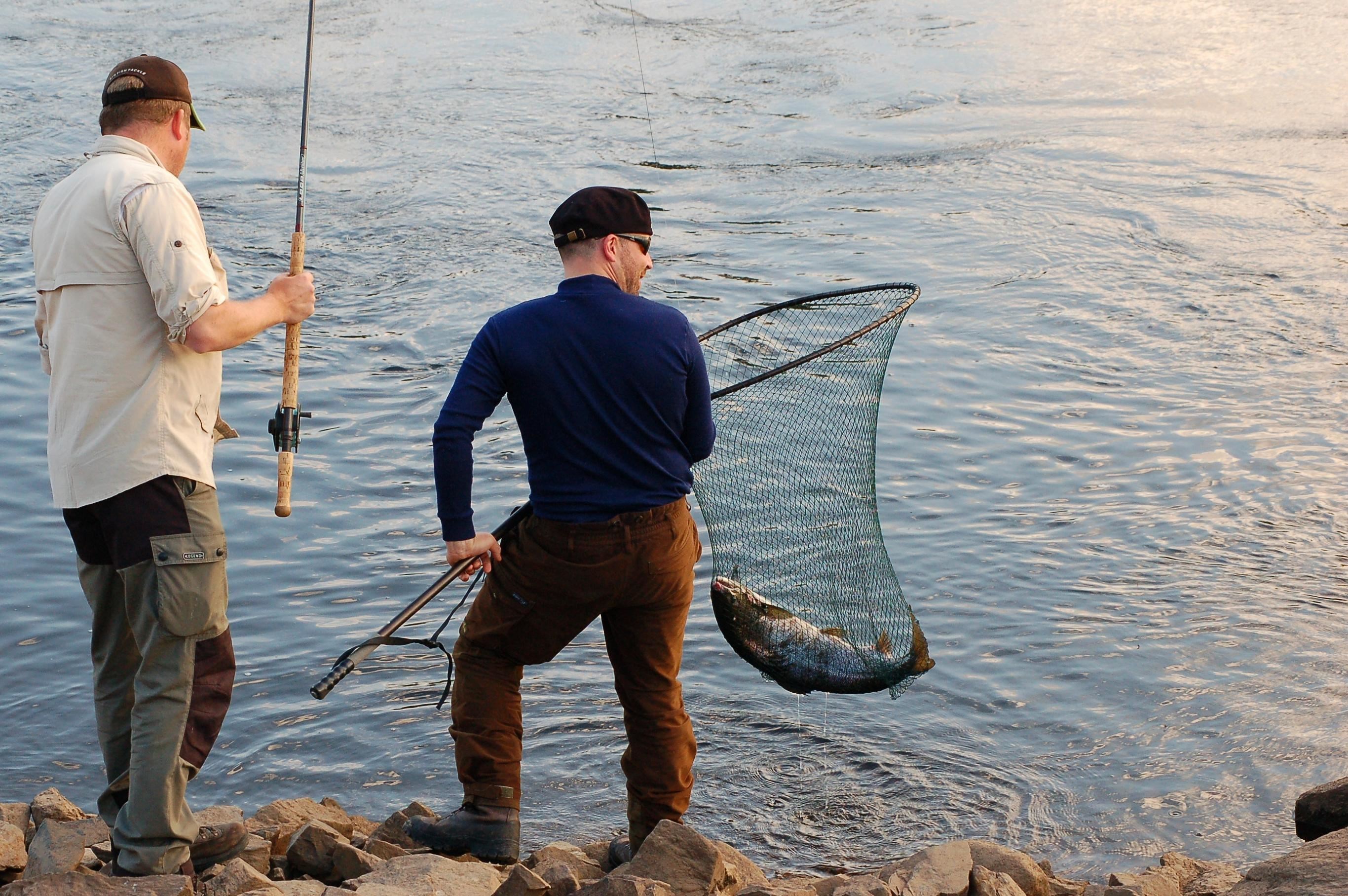 Foto: Media Lupus, Lax i håv vid Nipstadsfisket