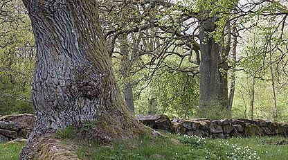 Herrevadskloster naturreservat