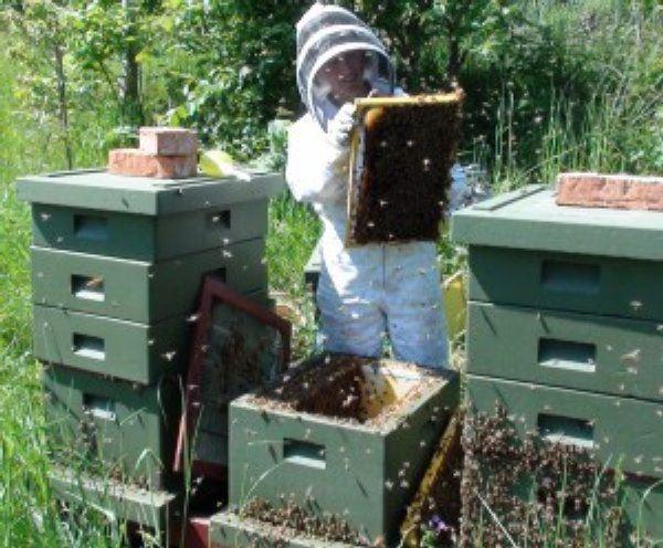 © linas och binas, linas och binas
