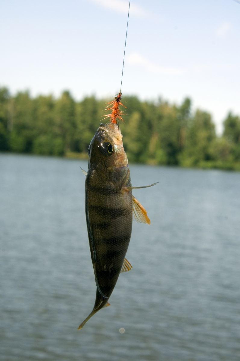 Fischzuchtgebiet Hensjön