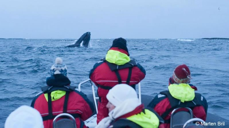 © Sea Safari Andenes, Whalesafari winter - Sea Safari Andenes