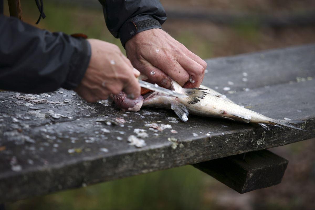 Fiske i Gislaved. Foto: Smålandsbilder.se