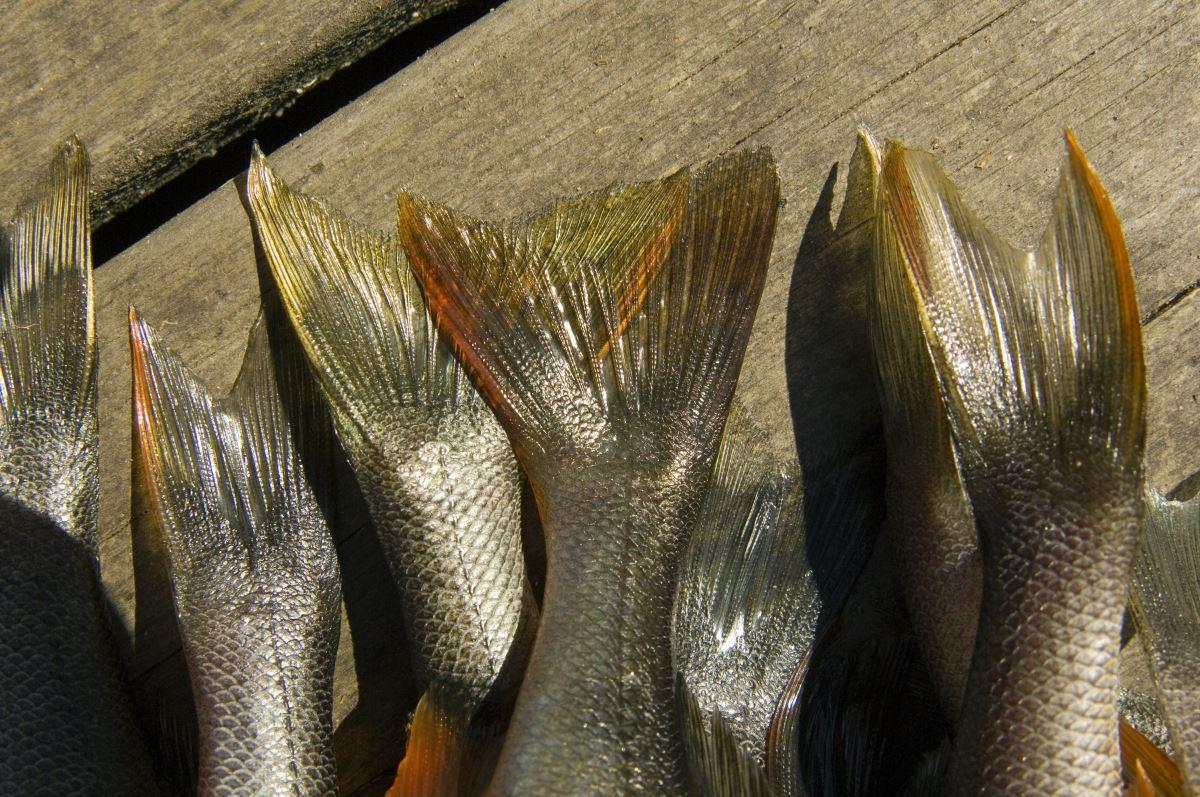 © smalandsbilder.se, Fischzuchtgebiet Bolmen