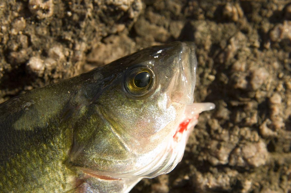Anderstorps fiskevårdsområde
