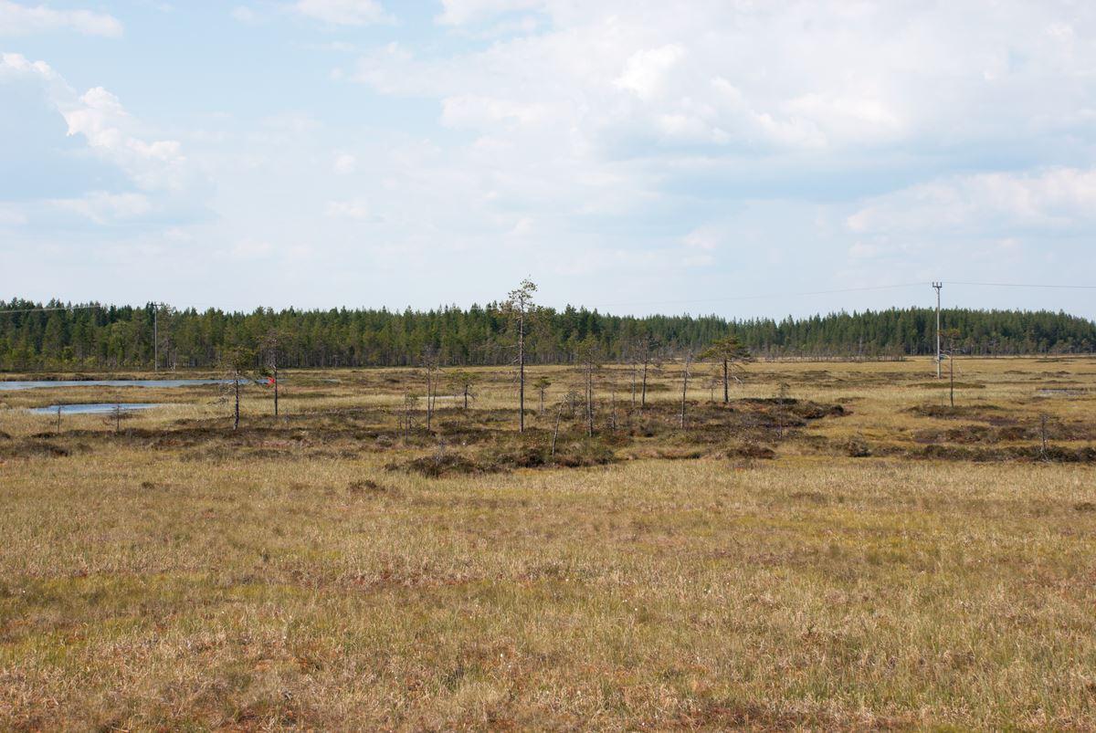 Torsmyrans naturreservat