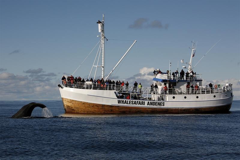 © Hvalsafari Andenes, Arctic winter whale safari, Hvalsafari Andenes