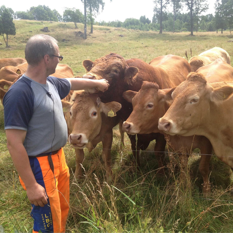 Hjälshammar Limousinkött,  © Värnamo Näringsliv AB, Hjälshammar Limousinkött