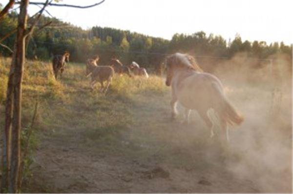 Liljedalens Häst & Logi
