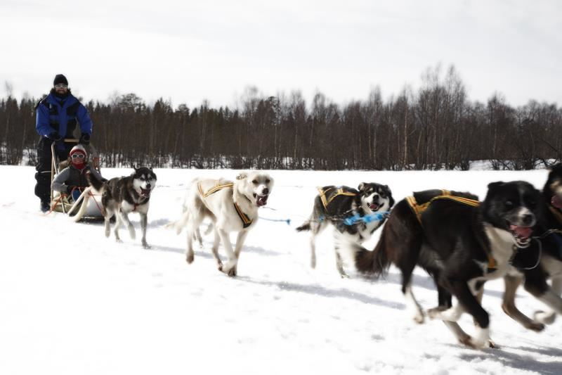 Dog sled tour and snowmobile safari - to activities in one excursion