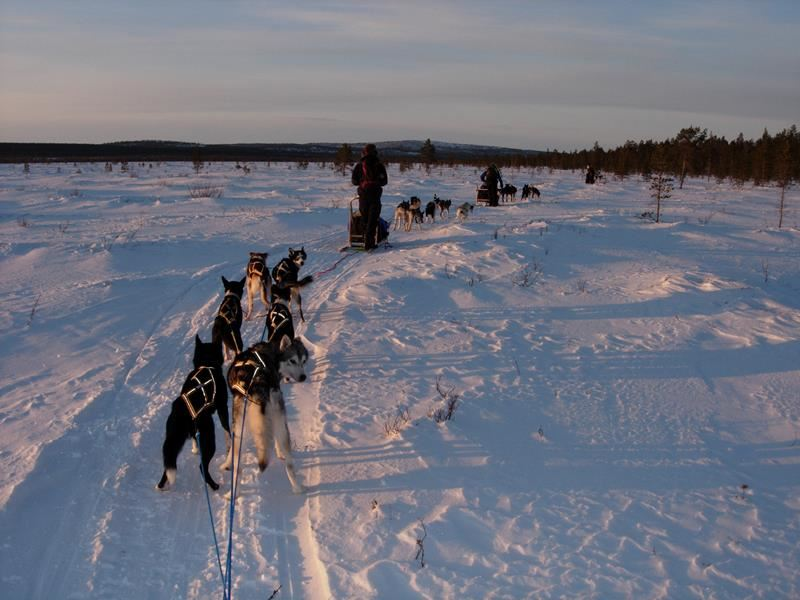 © Stein Johnsen, Hunting the northern lights with dog-sledge trip in Norwegian-Russian borderland including dinner