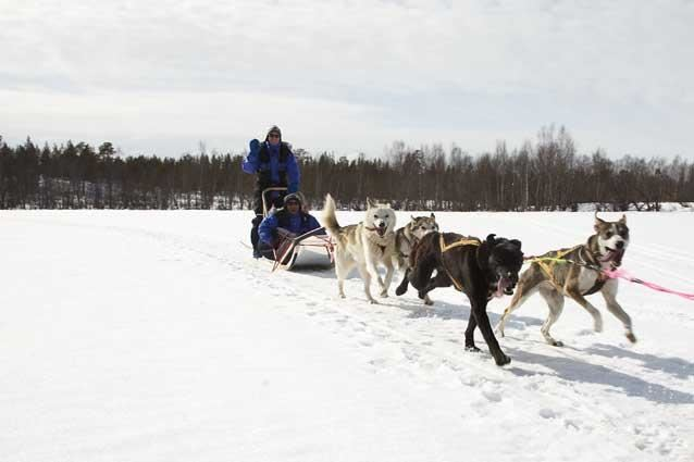 Overnight tour with dog sleds in the borderland