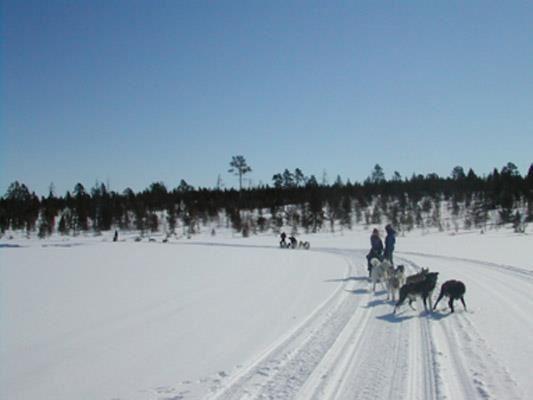 Kirkenes weekend - dog sledding