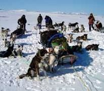 Dog sled expedition to the Arctic sea with Engholm Husky