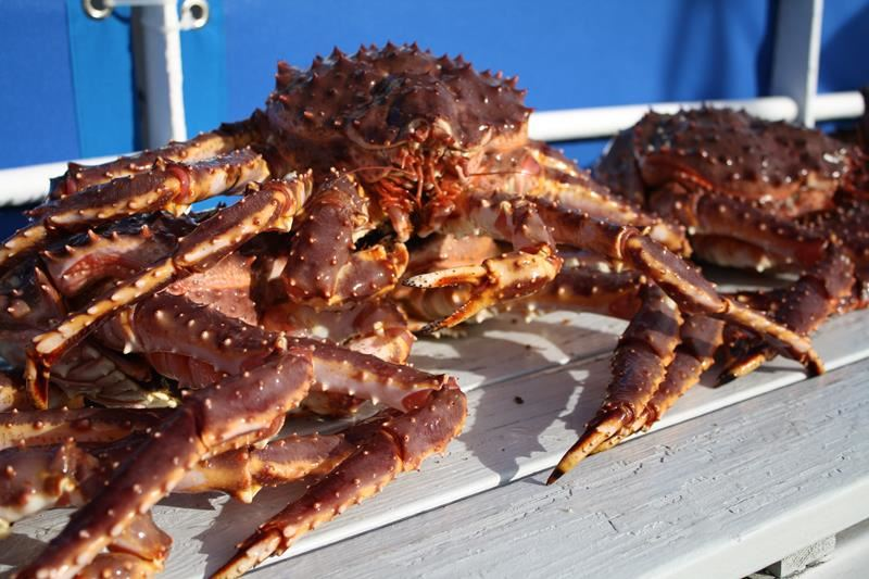 © Grenseløs, Coastal cruise with king crab catching