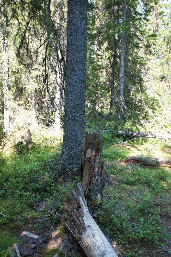 Långrumpskogens naturreservat