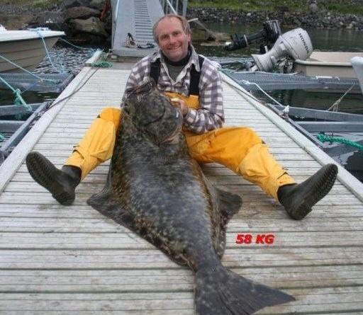 © Hasvik Hotel, The land of the Big fish