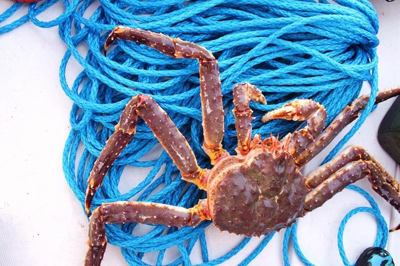 Arctic sea fishing