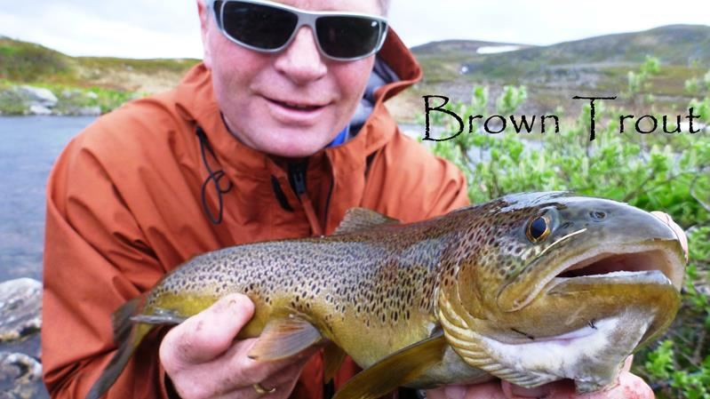 River fishing / Salmon fishing - Nordic Safari