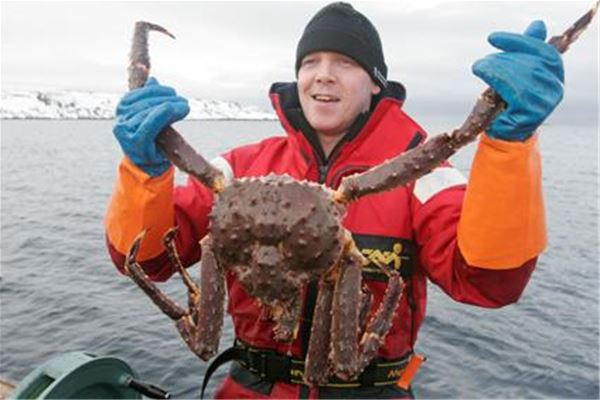 King crab fishing in winter and summer time- Nordic Safari