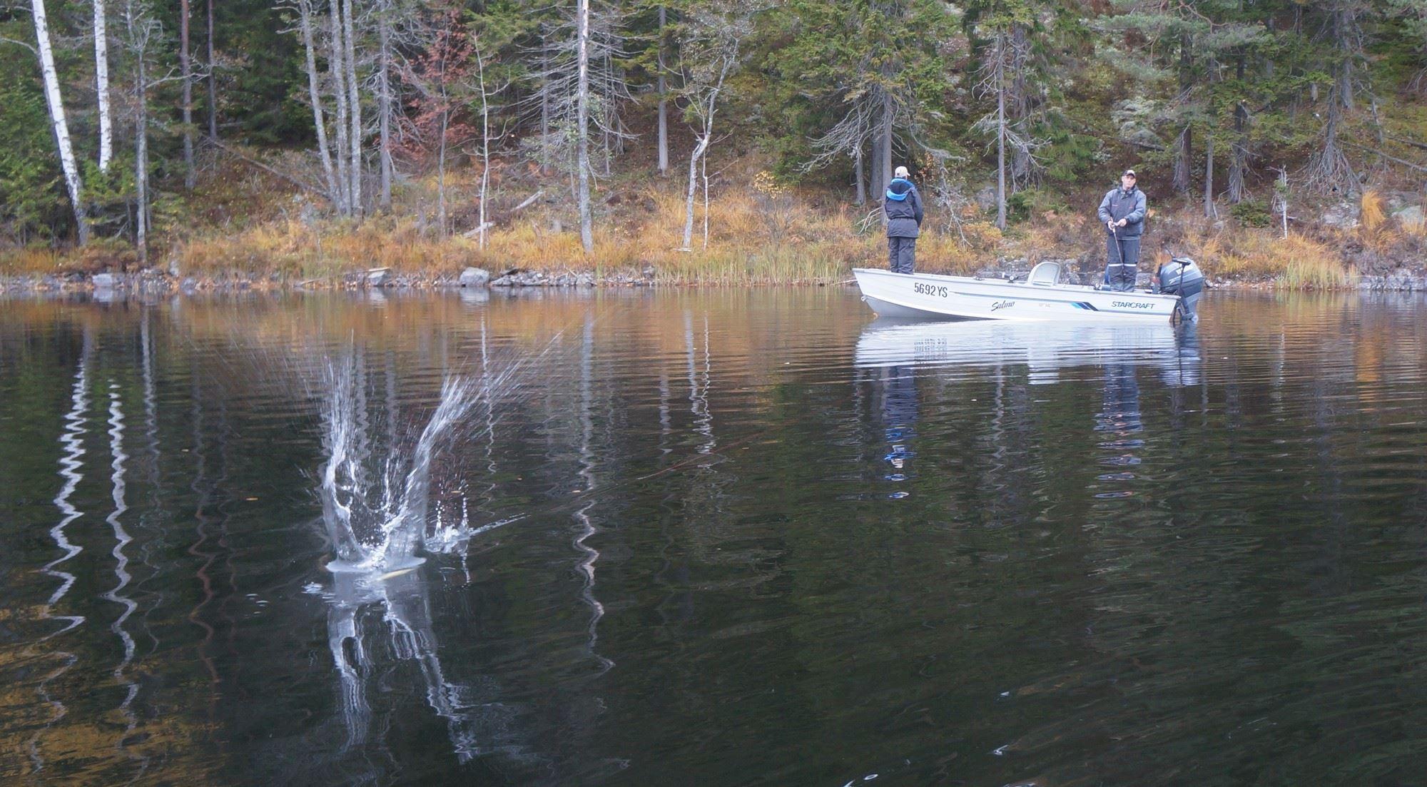Andy Van Assema,  © Andy Van Assema, Spinnfiske i sjön Edslan i Dalsland