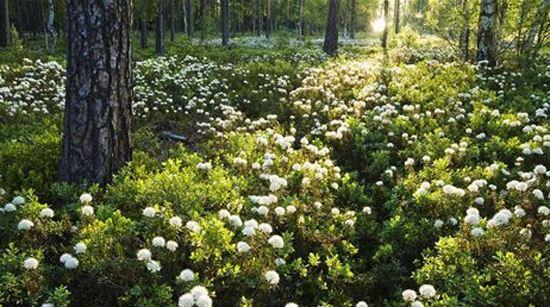 Skogens trädgård