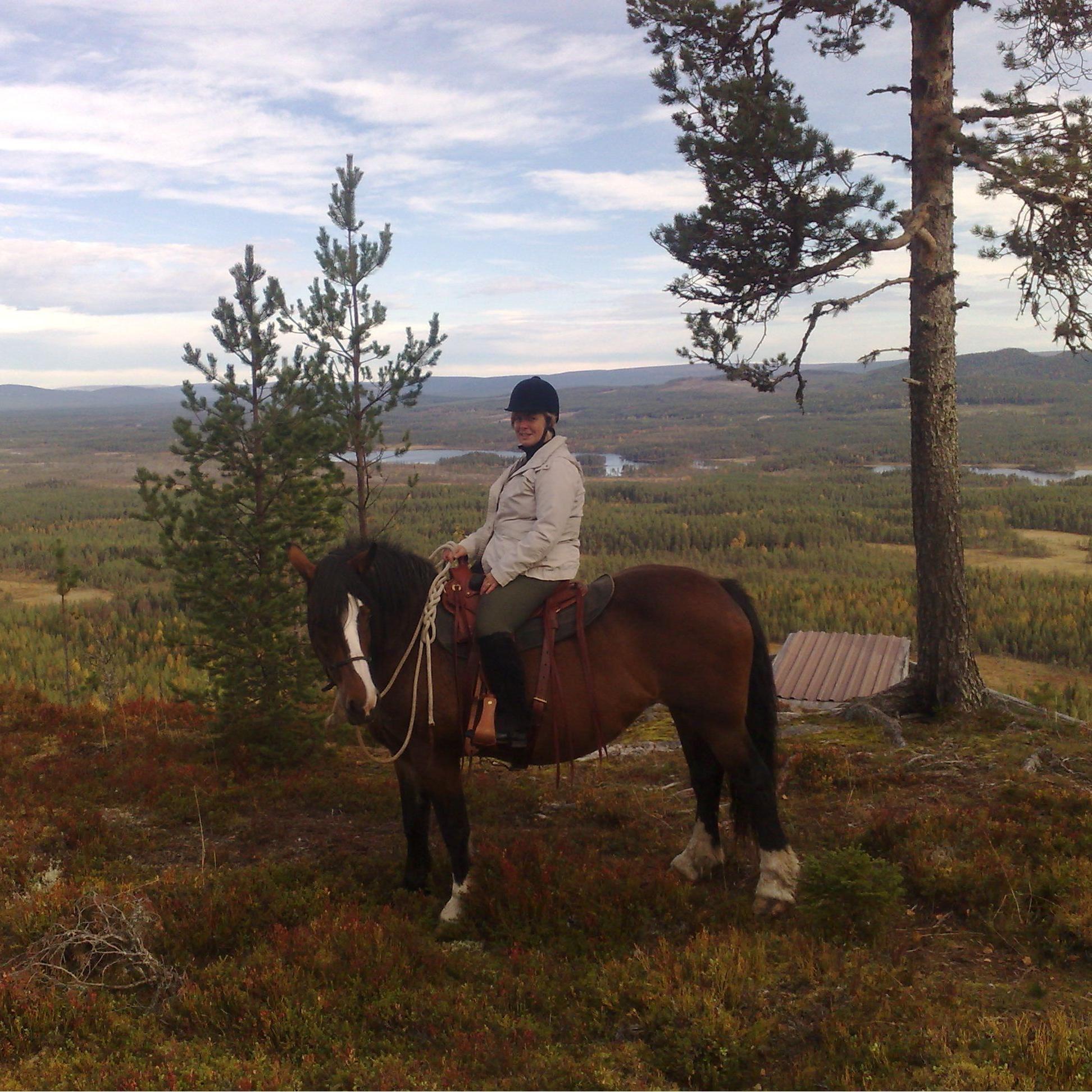 © www.heroshastar.se, Heros Horses - Rörbäcksnäs