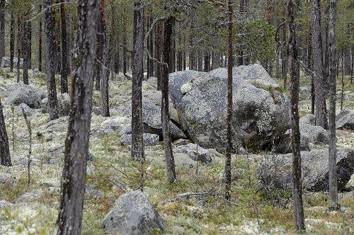 Nisse Schmidt, Ekopark Tranuberget
