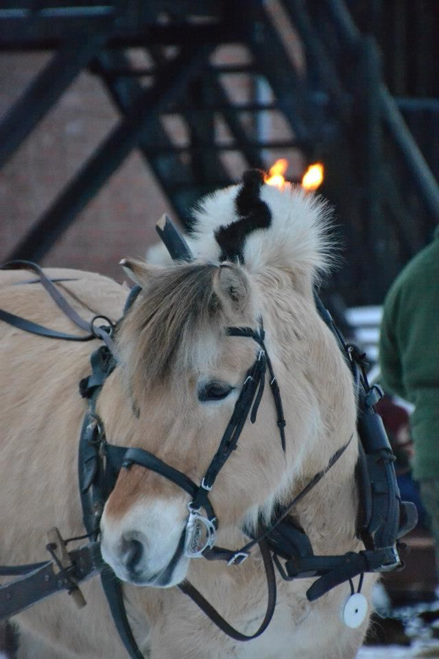 Sleigh rides / Horse and cart