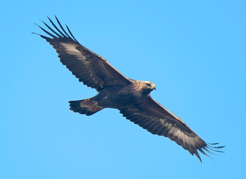 Karlskrona ornitologiska klubb