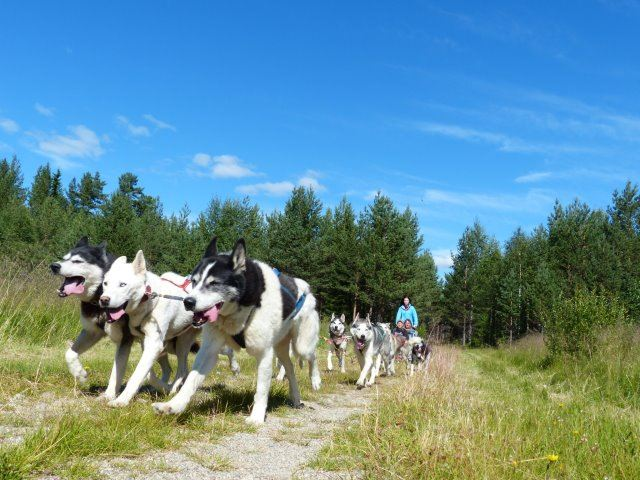 Experience autumn whit dog sledding