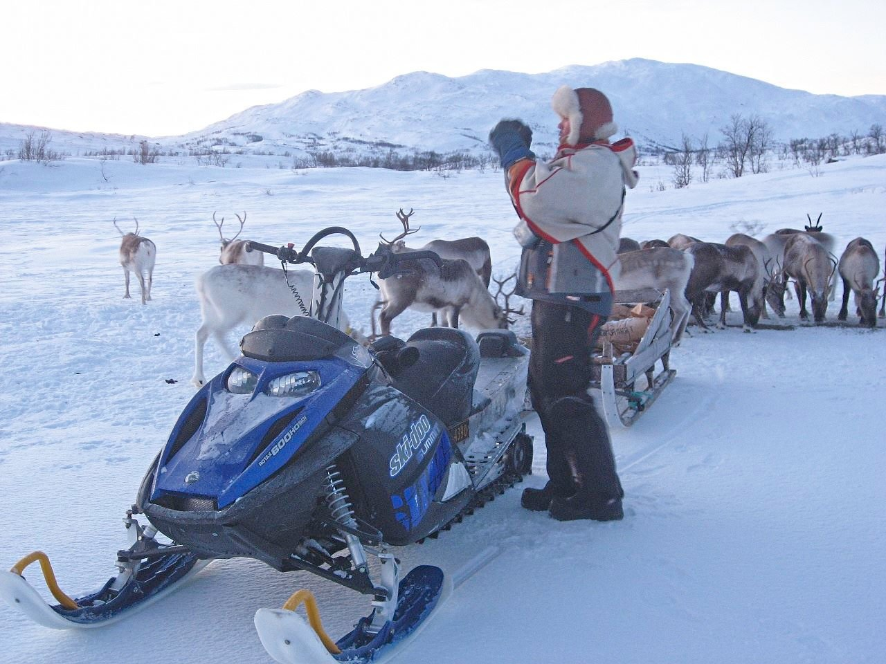 Snowmobile and Reindeer Herd Encounter – Arctic Guide Service