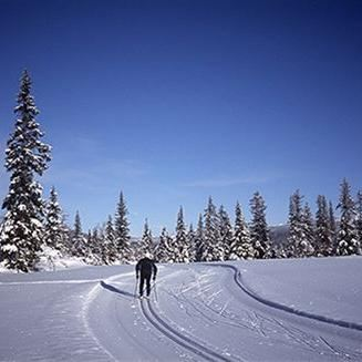 Cross-country ski school