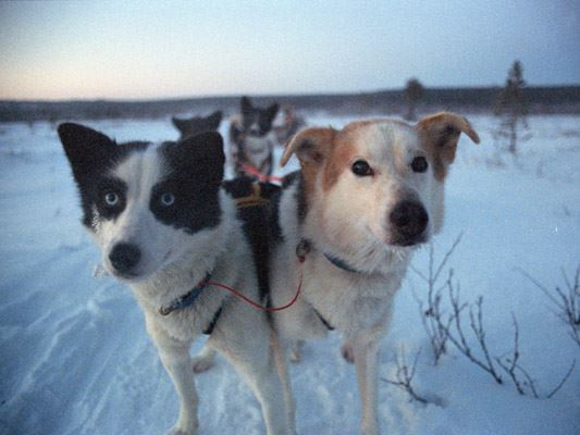 Day trip by dog sled