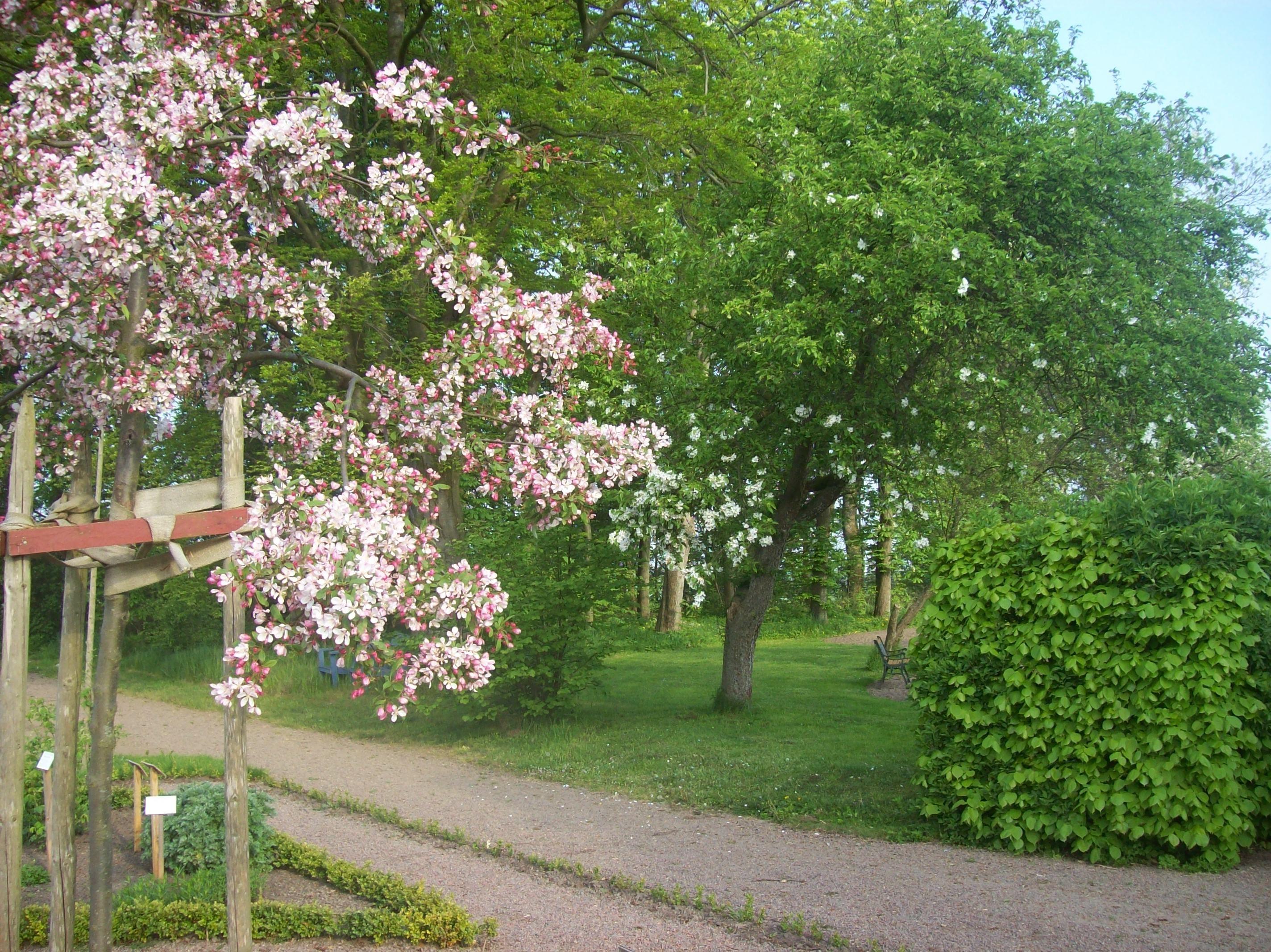 Bengt Åke Bengtsson, Heagårdens trädgård