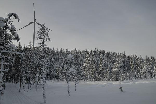 Sörskog