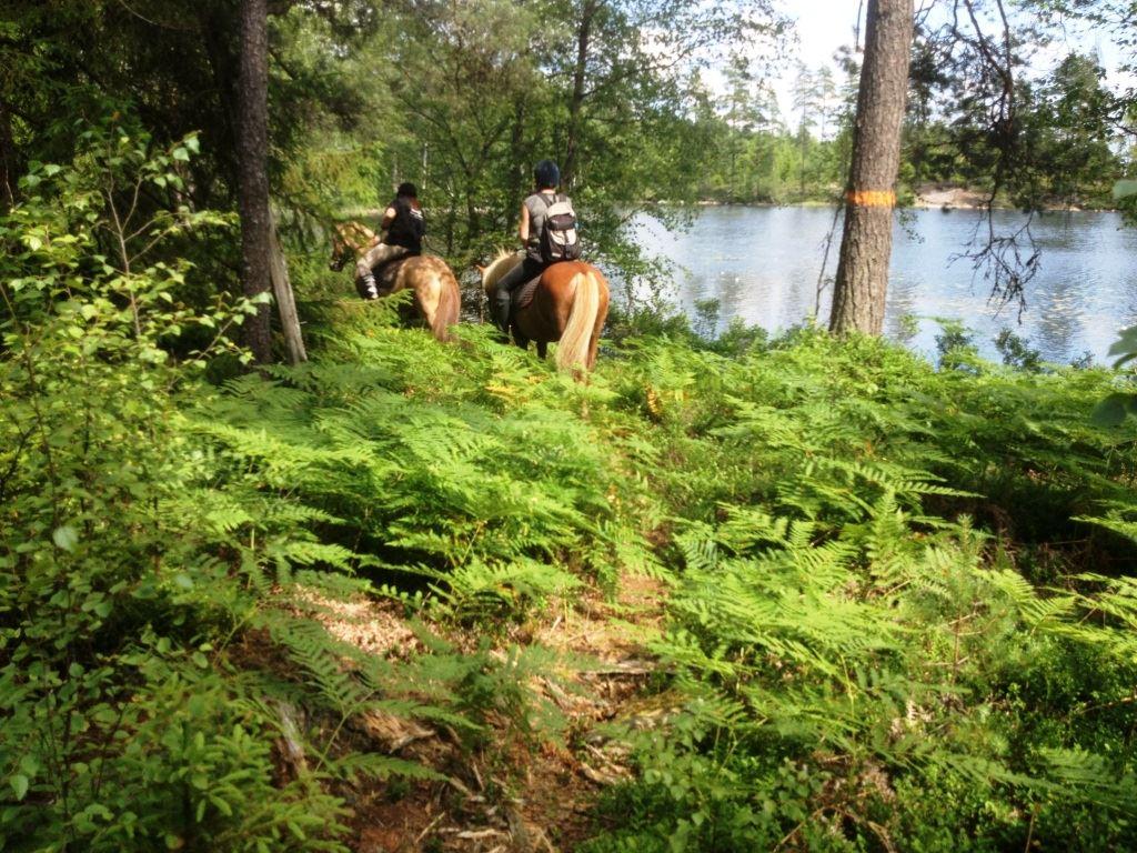 Emmas Islandshästar
