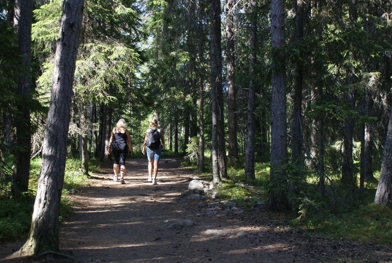 Foto: Jessica Ögren,  © Kramfors kommun, På väg till Rotsidan
