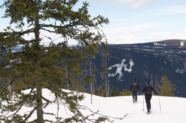 Snowshoe safari in Hafjell