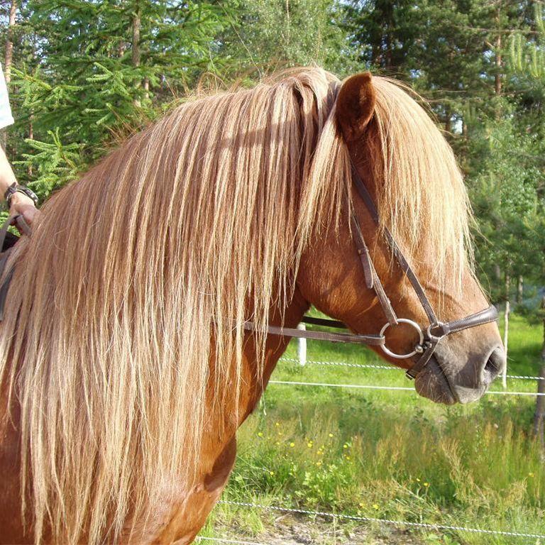 © www.nordiskvildmark.se, Nordisk Vildmarksupplevelse