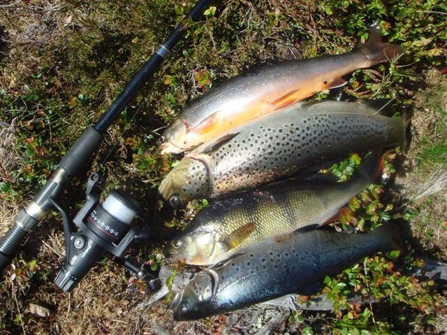 Fishing license Mora-Våmhus