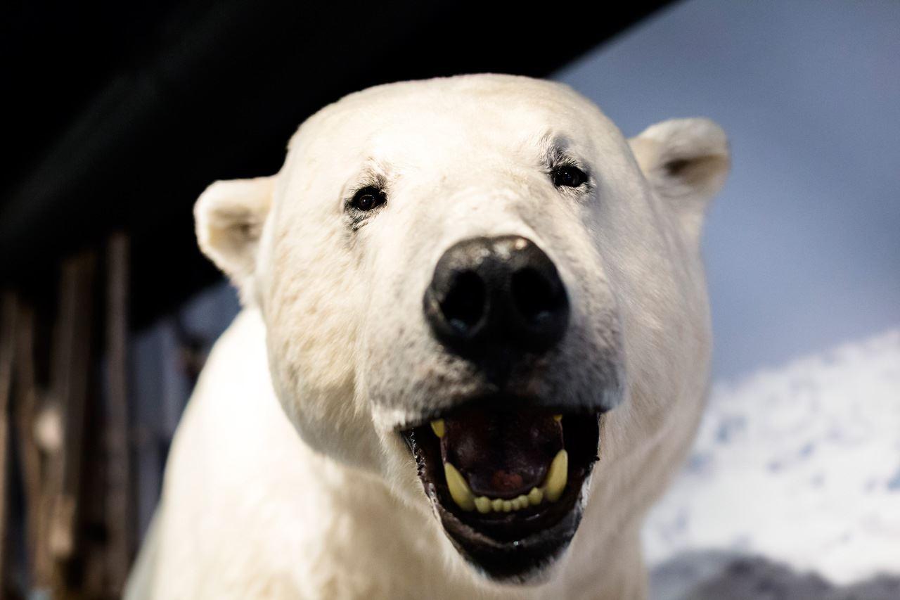 The Royal and Ancient Polar Bear Society