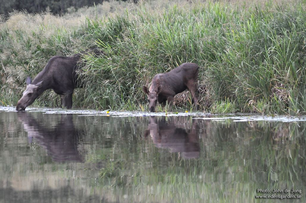 Beaver Safari – evening safari