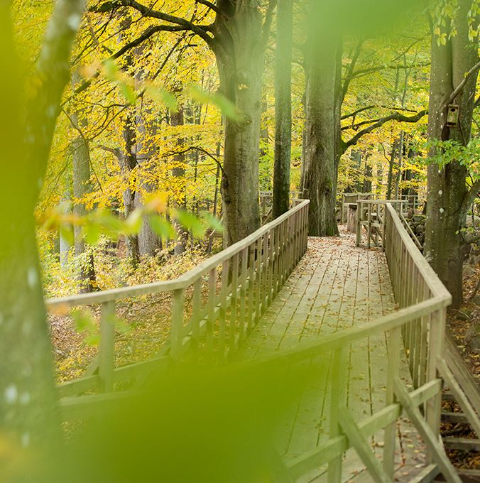 Fulltofta Nature Reserve