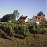 "Book a tasting at the Skillinge Winery ""Domain Sanana"""