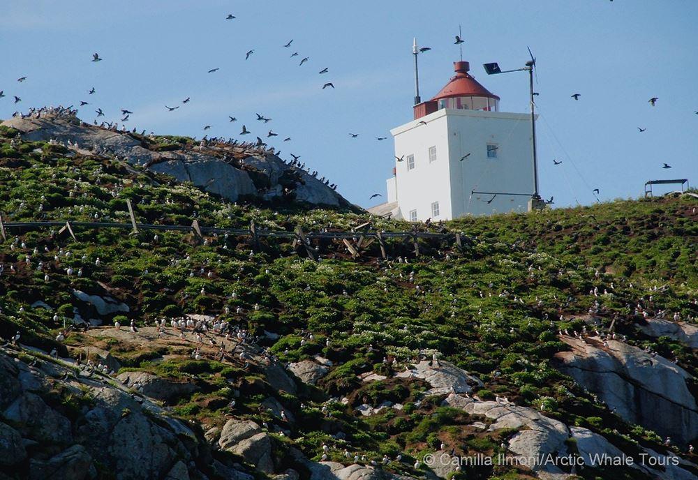 © Arctic Whale Tours, Arctic Whale Tours