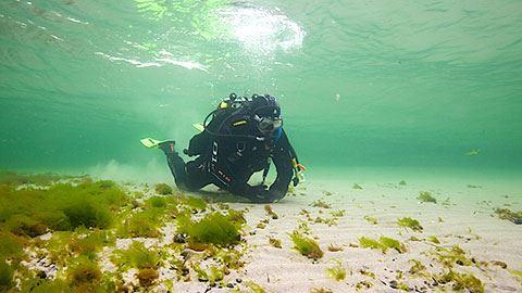 Helsingborgs snorkelled vid Råå vallar