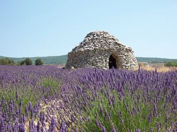 Excursion Provencal Markets and Lavender in Luberon - M7 2013