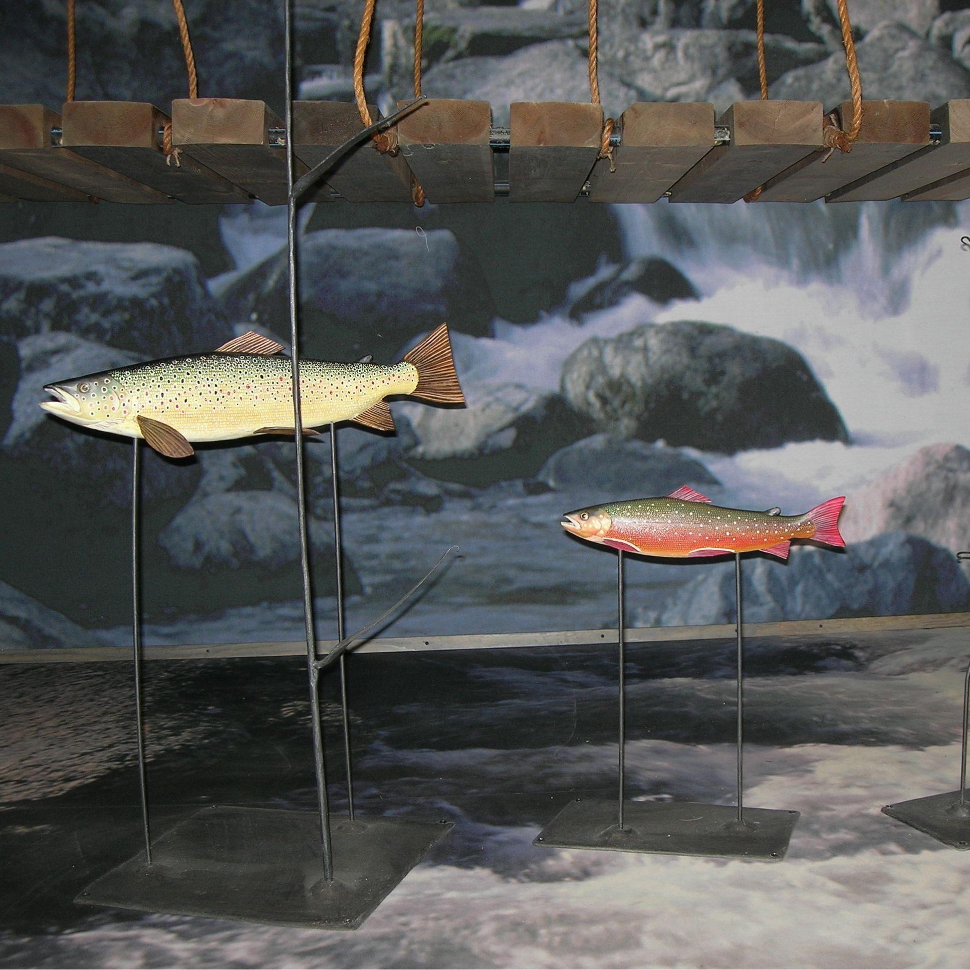 Andreas Karlsson,  © Hemavan Tärnaby PR-förening, Naturum Vindelfjällen - Hemavan
