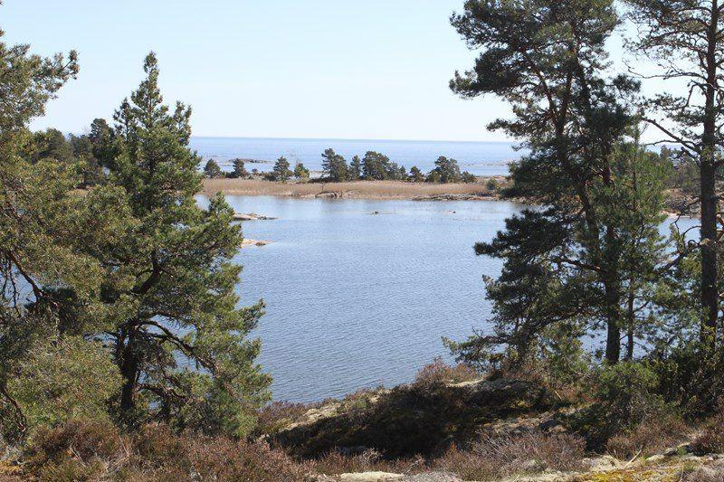 Andy Van Assema, Svanfjorden (Nedre Upperudsälvens Fischpfelgegebiet)
