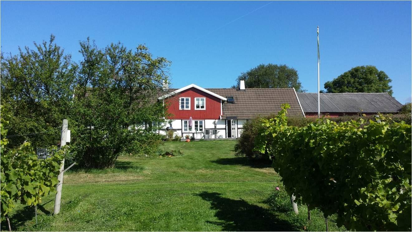 Foto: Södåkra vingård, Södåkra vingård
